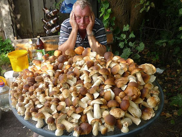 видео про белый гриб